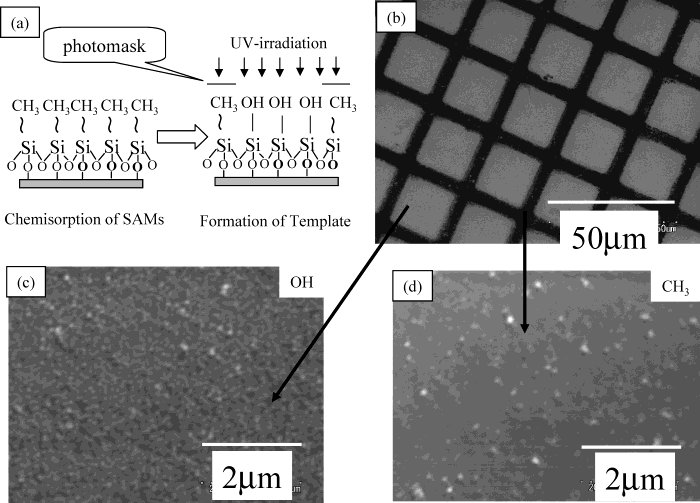 Micropatterning of TiO 2 Thin Film in an Aqueous