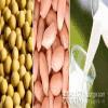 各种豆浆做法
