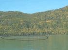 论文 喀纳斯湖水怪