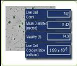 Cellometer全自动细胞计数分析仪
