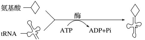 高考生物备考黄金易错点:专题03+酶与ATP(原卷版)