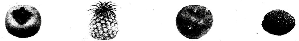 浙江省温州地区2011-2012学年第一学期期末考试