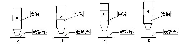 重庆市巫山中学2015-2016学年高二生物上学期第一次月考试题