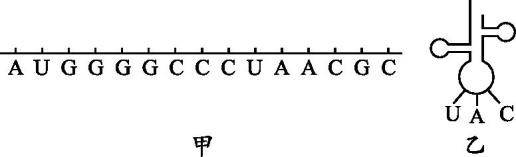 2019高中生物 第3章 遗传信息的复制与表达 3.2 遗传信息的表达练习 北师大版必修2答案