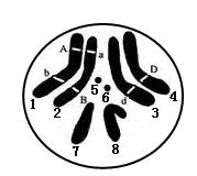 9.变异高三生物二轮复习  可直接打印