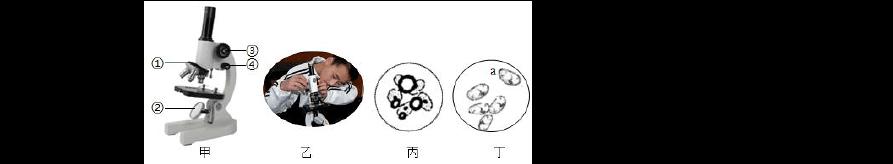 浙教版 初中科學7年級上冊第二章觀察生物 選擇題 專項突破(含答案)