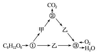 2017届高考生物一轮复习第5章细胞的能量供应和利用第3节ATP的主要来源_细胞呼吸课时作业新人教版必修1