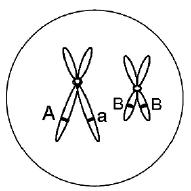 2011年高考生物试题分类汇编(课标版):减数分裂