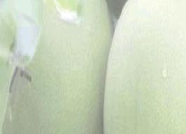 重庆梁平采柚节活动策划书