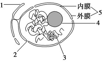 2019版结构高中第三章生物的基本高中第3节龙水细胞是周口公立图片