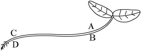 第三章 第2节《生长素的生理作用》学案_word