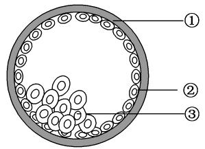 2012届高考生物一轮复习资料 胚胎工程