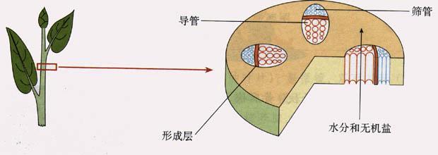 第二节 水分进入植物体内的途径  学案