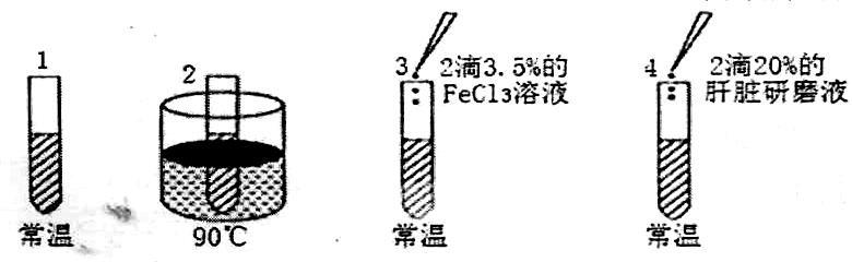 山东省烟台市2015年高考适应性练习(一)理综试题及答案