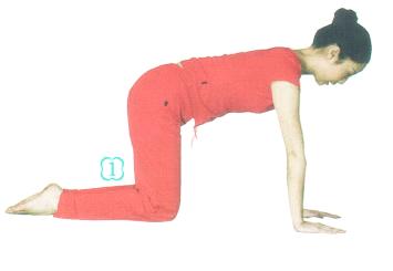 瑜伽-猫式图片