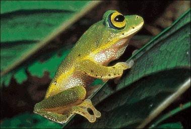 蝌蚪到青蛙的演变图片