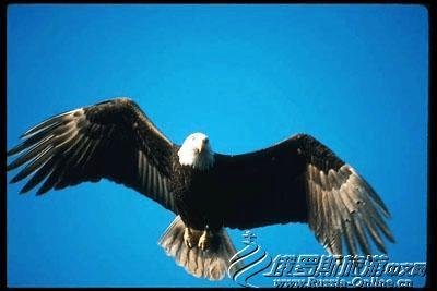 """俄罗斯中的""""鹰""""文化"""