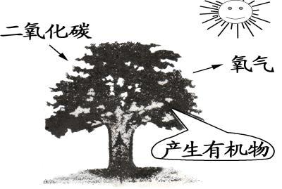 2015年廣東省學業畢業生初中v學業生物模擬試李陽初中語法新版圖片