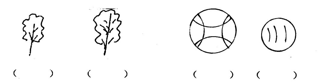 小学一年级上册数学期末试卷答案图片