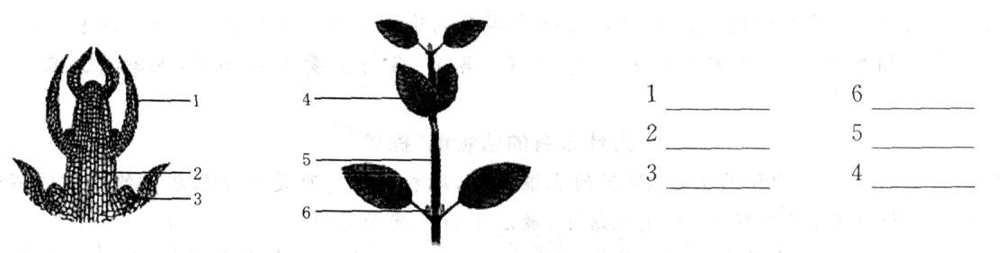 植株的生长和水分进入植物体内的途径学案