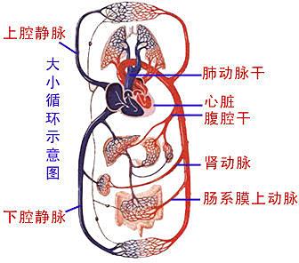 最全的人体解剖图