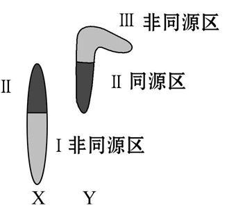 高一生物基因和染色体的关系单元练习题2