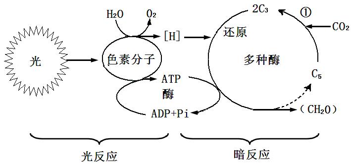 1下面为某植物细胞亚显微结构模式图请回答下列问题图片