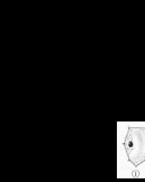 黄冈市2010初中毕业生物会考试题及答案.