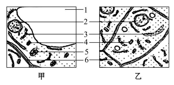 【最新】高考生物二轮复习 高考热点专项练 热点7 中心法则