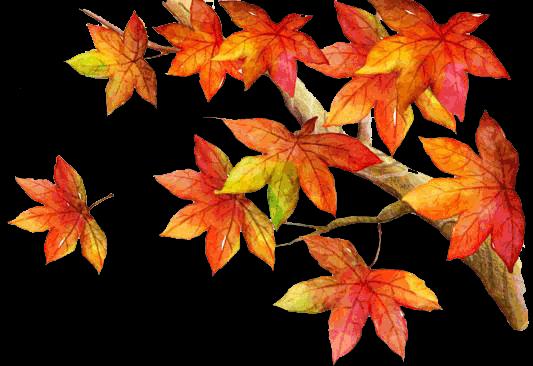 简报的秋天260A3小学生电子小报金色,成品报绿城小学怎么样图片