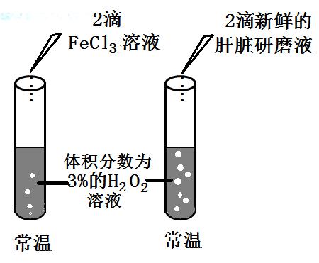 南京市2012-2013学年高二学业水平测试模拟考试生物试题