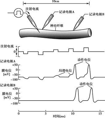 人体生理弯曲_人体生理学