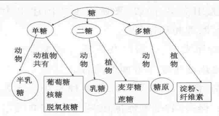 模型建构在高中生物教学中的应用_刘鑫图片