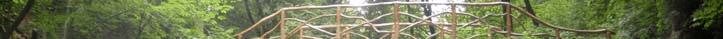 欧兽01   小动物影像学