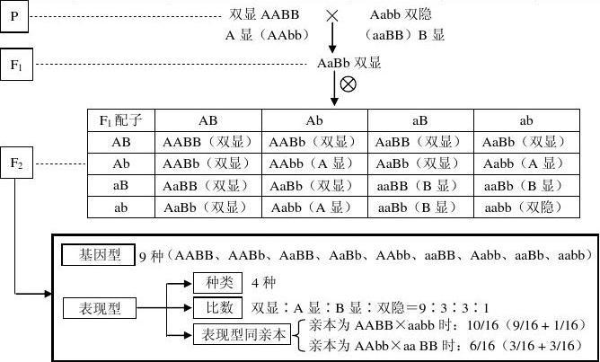 专题七 遗传的基本规律