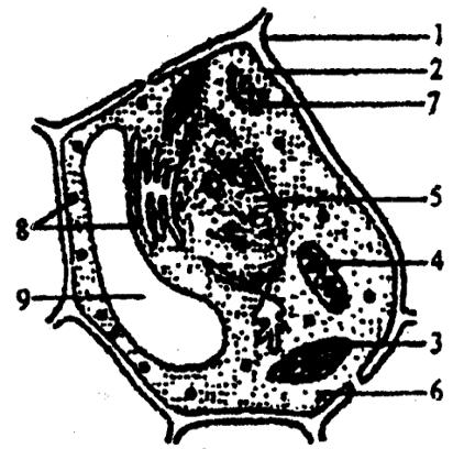 (11分)下图为成熟植物细胞结构模式图请据图回答下列问.图片