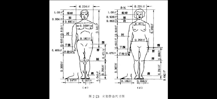人体比例_人体站姿及坐姿比例