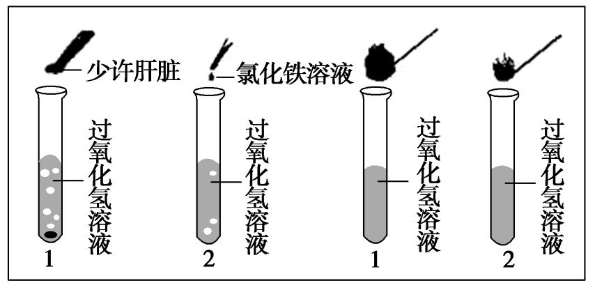 中图版必修1 细胞能量的来源与转变 第二课时 作业答案