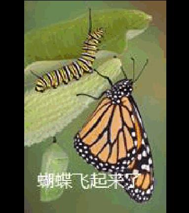 小学三年级科学下册_毛毛虫变蝴蝶的过程_word文档在线阅读与下载_免费文档