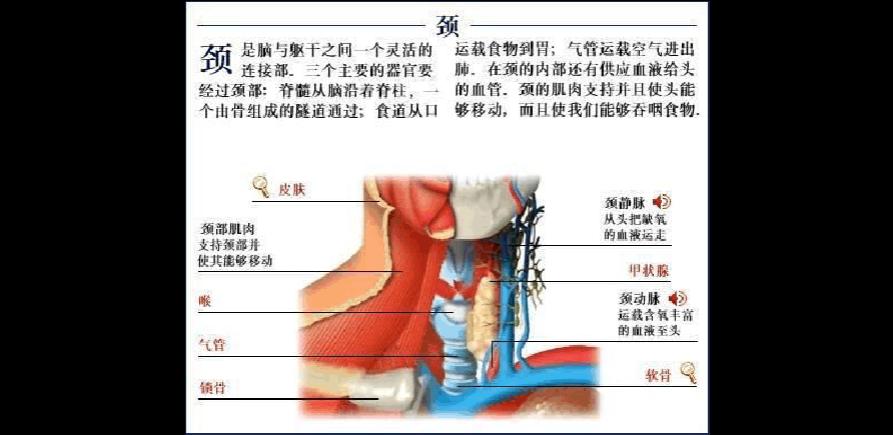 人体结构和功能_人体各器官 结构功能图解
