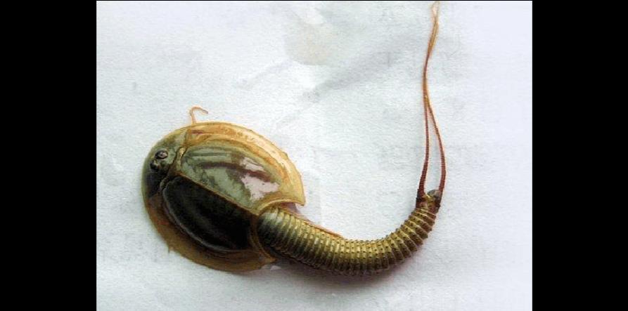 是一类小型的甲壳动物.【印尼章鱼人】印尼妇女妮塔日前在煮恐龙时?沙盒章鱼图片