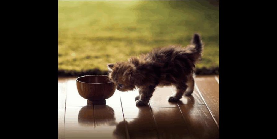 猫咪喜欢吃什么零食?