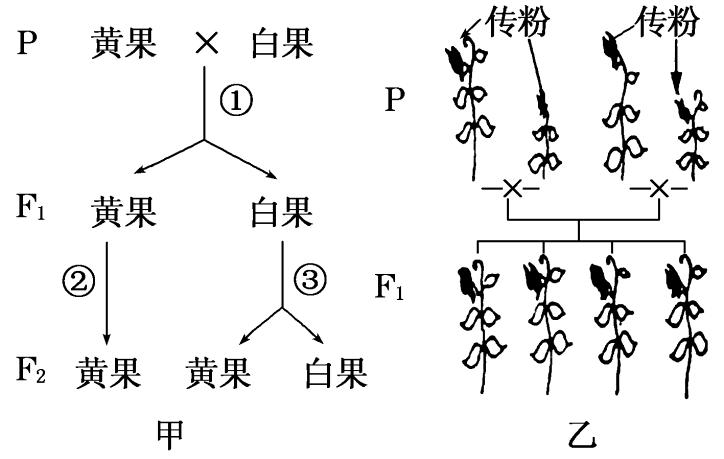 遗传的基本规律和伴性遗传一轮复习精品练习题答案