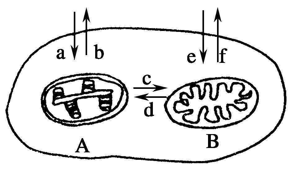 解析:图中a 代表叶绿体,b 代表线粒体,a 代表细胞从外界吸收二氧化碳图片