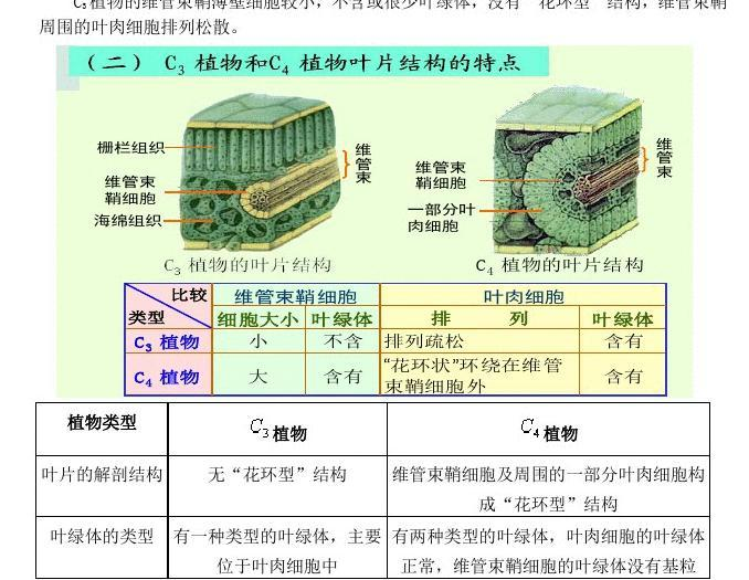 无忧文档C4植物与C3植物的比较