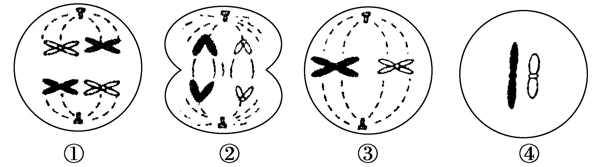 生物必修二第二章基因与染色体的关系综合测试