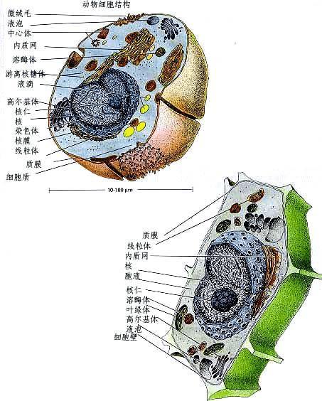 生物细胞结构示意图
