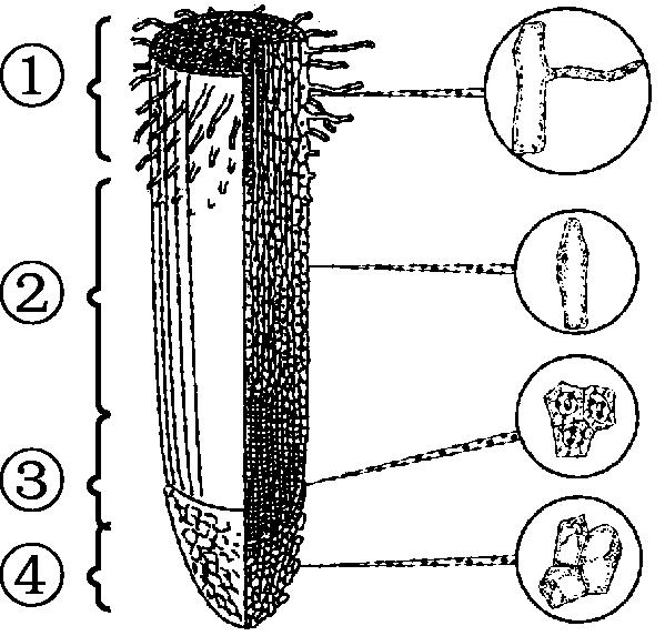 苔藓类植物_耐阴类水培植物有哪些_类马齿觅植物