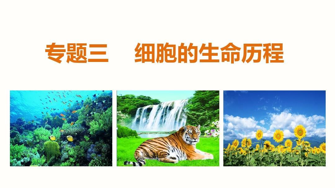 【步步高】2015高考(江苏)生物大二轮课件:专题三第1讲 细胞增殖和受精作用PPT