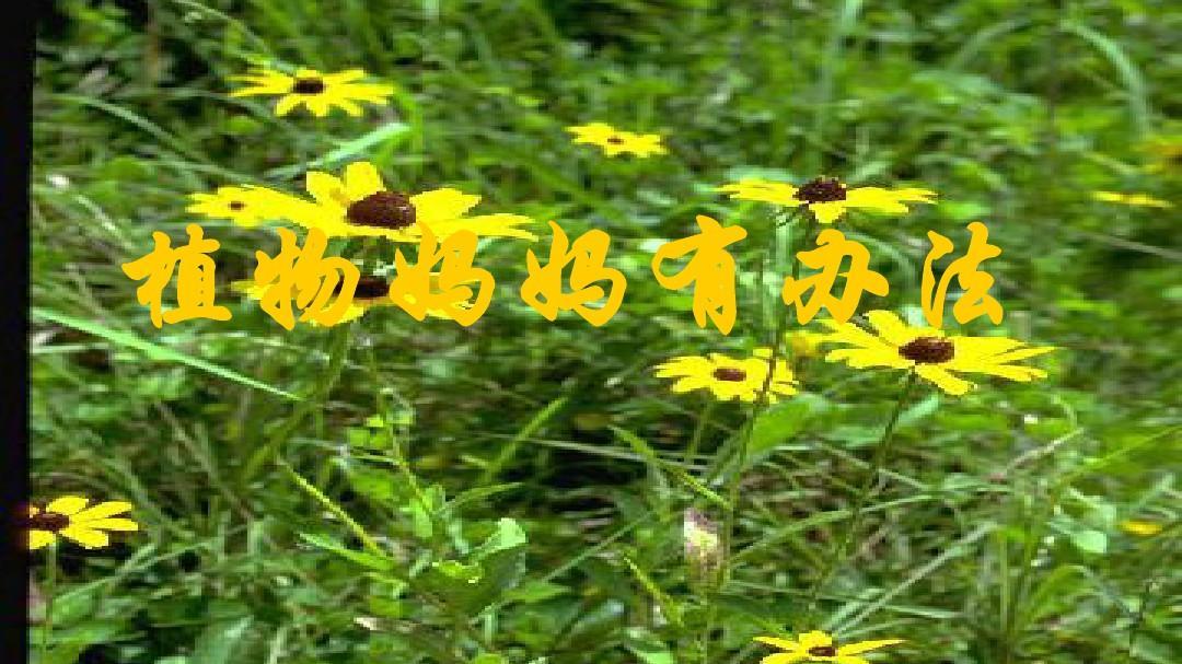 最新2017秋冀教版上册二植物语文单元《年级初中语文课说体育ppt图片